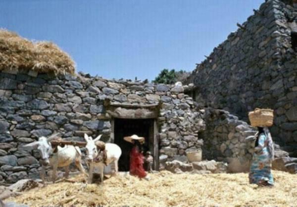 فتيات يقمن بدرس محصول القمح في جرين بتنومة