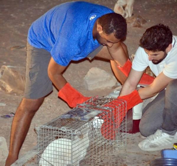 اصطياد حيوانات مشردة في هجرة خريص