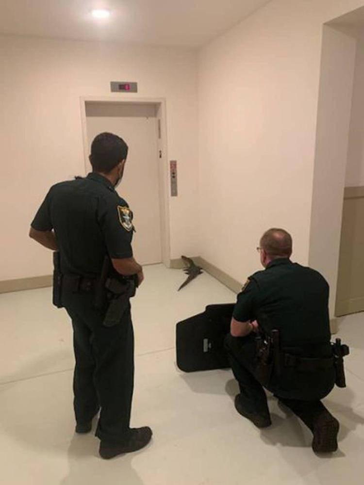 تمساح يحتجز سكان في مصعد