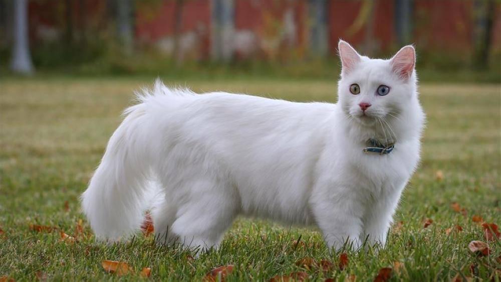 تطبيق تفسير مواء القطط
