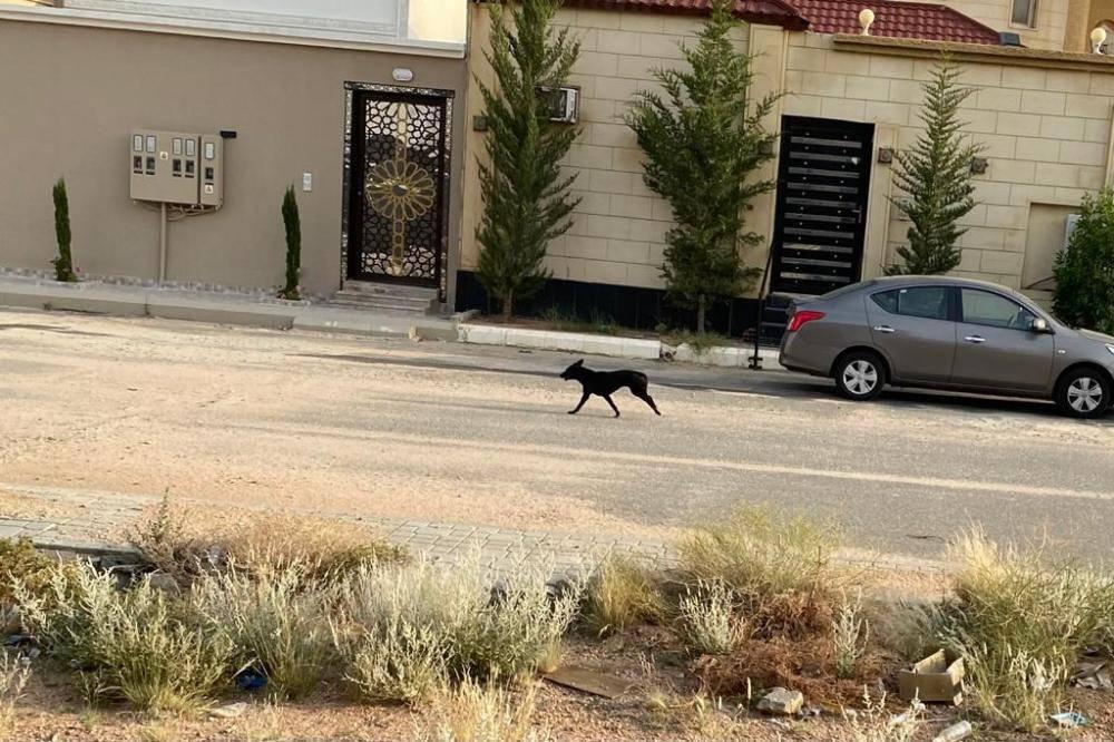 كلب ضال أمام منزل بالطائف