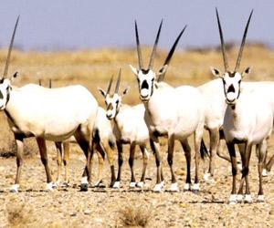 7 محميات للحيوانات المهددة بالانقراض