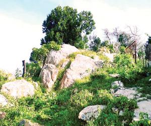 غابة جبل الصهاليل تترقب تحويلها لمتنزه وطني