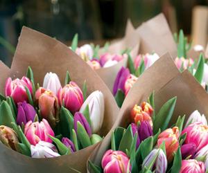 30 % نسبة التجاوب مع العلاج السلوكي بواسطة الورود