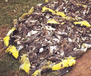 وزارة البيئة صيد الطيور المهاجرة مخالف للأنظمة جريدة الوطن